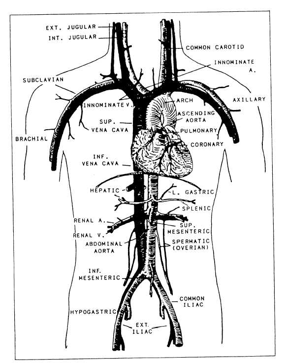 Lettieri blog: innominate artery
