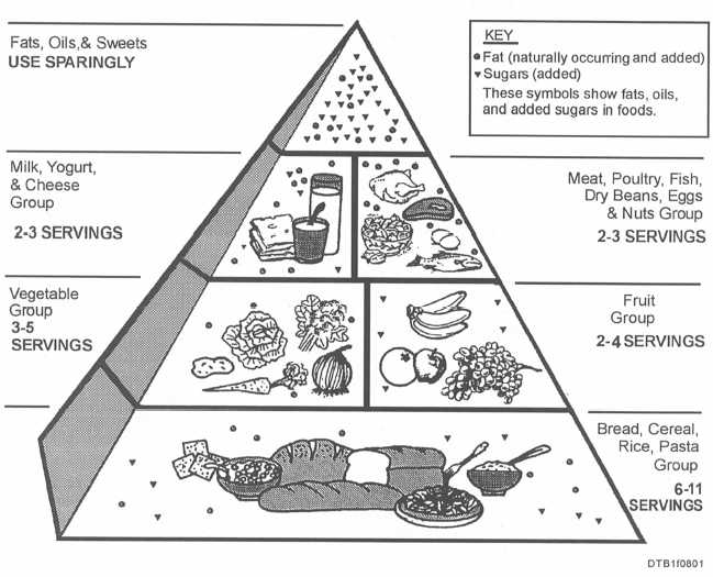 Workbooks » Food Pyramid Worksheets - Printable Worksheets Guide ...