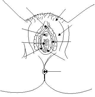 vagina the vagina is the organ that receives the male